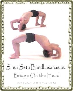 Bridge pose setu bandhasana