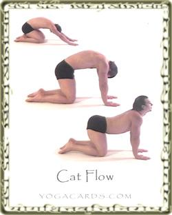 cat flow