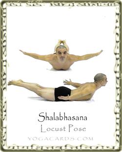 locust pose shalabhasana