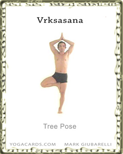 tree pose vrksasana