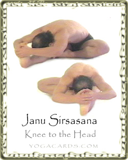 janu sirsasana  knee to the head and yoga tutorial