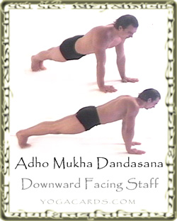 adho mukha dandasana downward facing staff pose